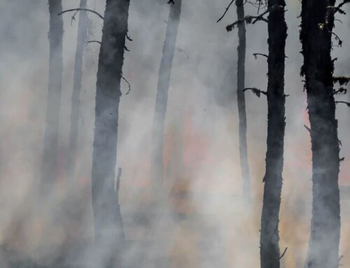 Wildfire in Lytton, B.C. a 'wake up call': safety board